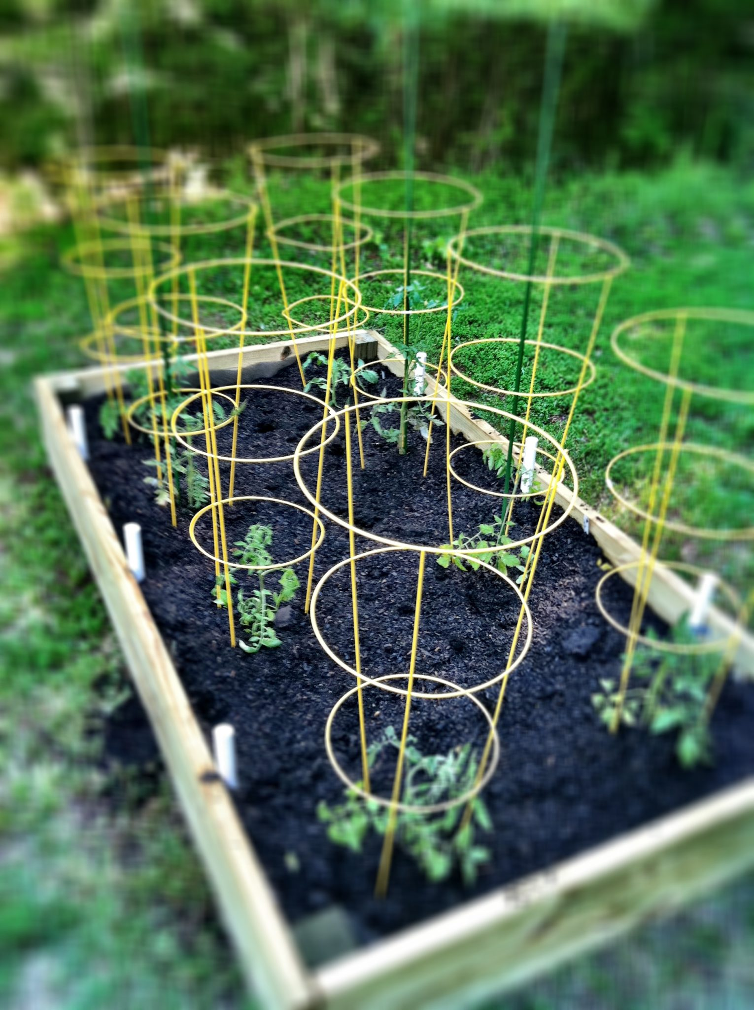 How to Build a Raised Garden Bed | bell' alimento