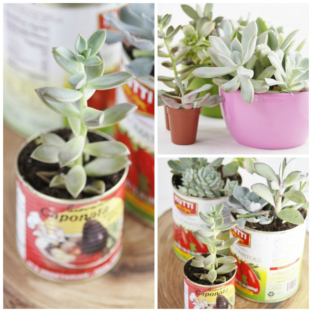 DIY Recycled Can Centerpiece Collage. Tin Can with succulent planted. 4 various succulent plants. 3 tin cans with planted succulents sitting on a piece of wood.