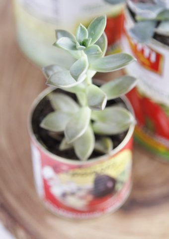 close up of succulents planted in tin cans sitting on top of a piece of wood.