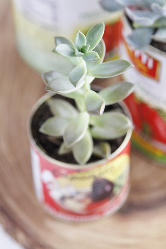 Close up photo of DIY Recycled Can Succulent Centerpiece, tin can with planted succulent sitting on wood.