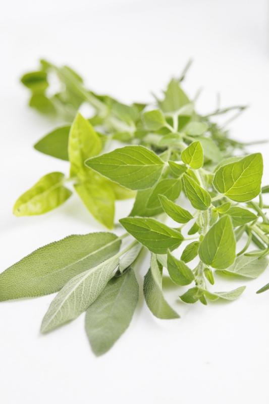 Fresh Herbs www.bellalimento.com
