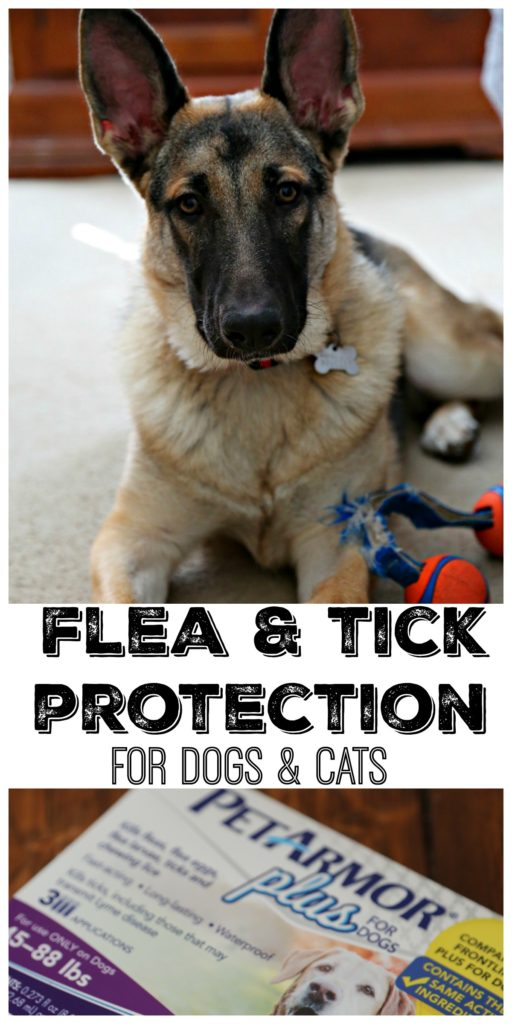 Pinterest image. German Shepherd with Toy box of PetArmor Plus with text that reads flea & tick protection for dogs and cats.